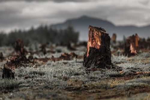 deforestation-tabac-cnct-environnement