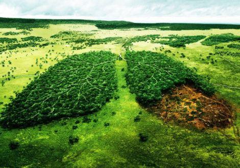 L'industrie du tabac, nuisible à l'environnement