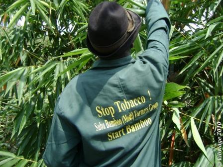 alternatives-culture-tabac-kenya-bamboo-environnement