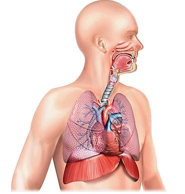 Tabac : des risques spécifiques sur l'appareil respiratoire - CNCT