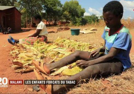 Pourquoi les agriculteurs cultivent-ils la feuille de tabac ? Cas de l'Afrique