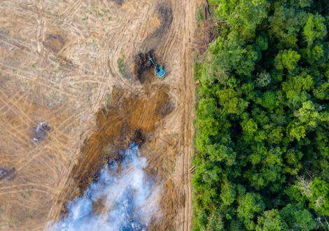 L'impact majeur du tabac sur la déforestation