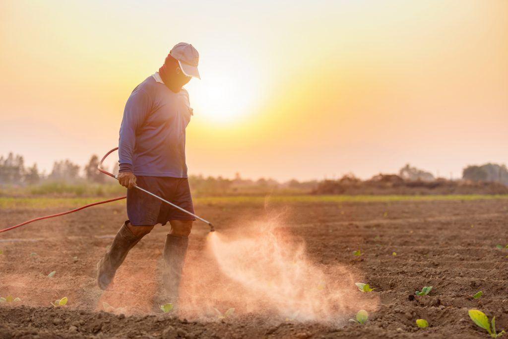 La culture du tabac est liée à une consommation élevée de pesticides